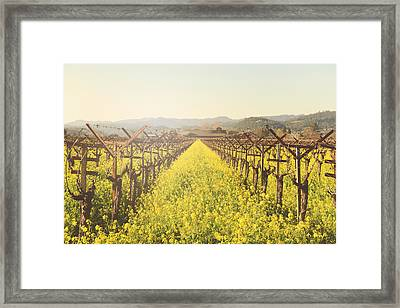 Vineyard In Spring With Vintage Instagram Film Style Filter Framed Print by Brandon Bourdages