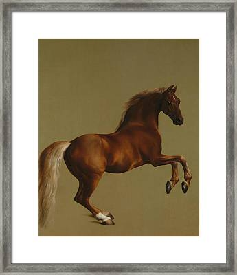 Whistlejacket Framed Print
