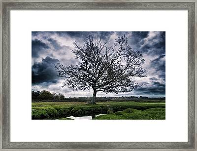 Winter Tree Framed Print by Joana Kruse