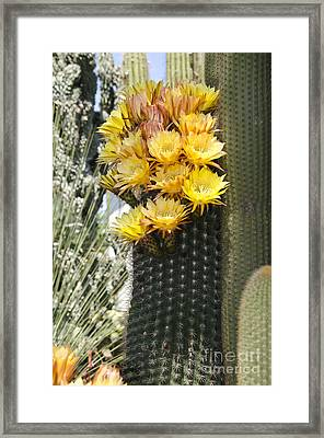 Yellow Cactus Flowers Framed Print