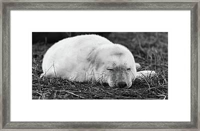 40 Winks Framed Print
