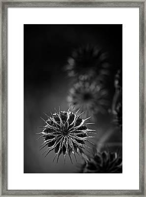 432 Hz Framed Print