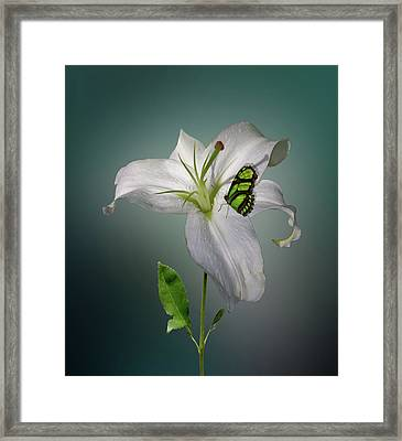 Framed Print featuring the photograph 4371 by Peter Holme III