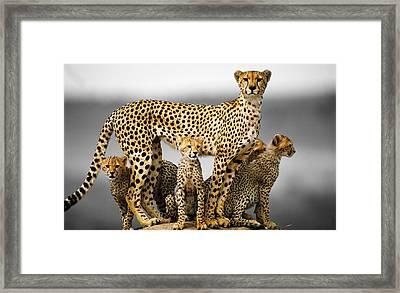 43782 Cheetah Cheetah Family Framed Print