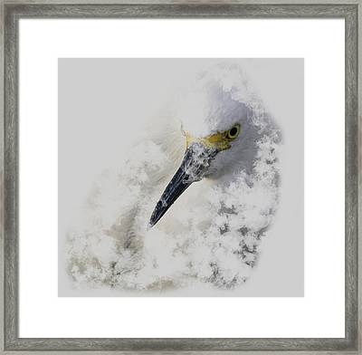 Framed Print featuring the photograph 4386 by Peter Holme III