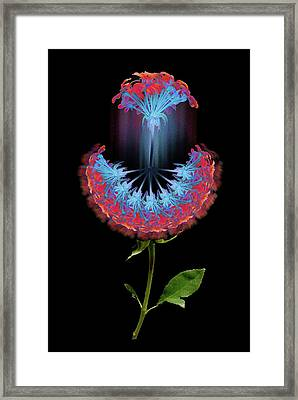 Framed Print featuring the photograph 4389 by Peter Holme III