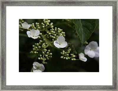 Flowers Framed Print by Luke Robertson