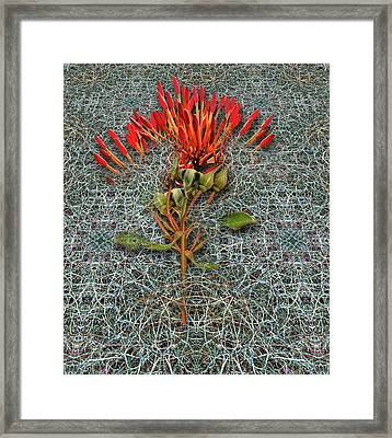 Framed Print featuring the photograph 4400 by Peter Holme III