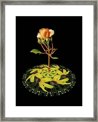 Framed Print featuring the photograph 4407 by Peter Holme III