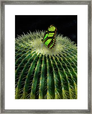 Framed Print featuring the photograph 4409 by Peter Holme III