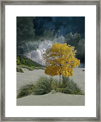 Framed Print featuring the photograph 4422 by Peter Holme III