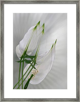 Framed Print featuring the photograph 4425 by Peter Holme III