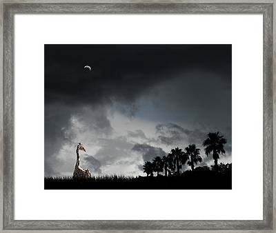 Framed Print featuring the photograph 4458 by Peter Holme III
