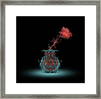 Framed Print featuring the photograph 4469 by Peter Holme III