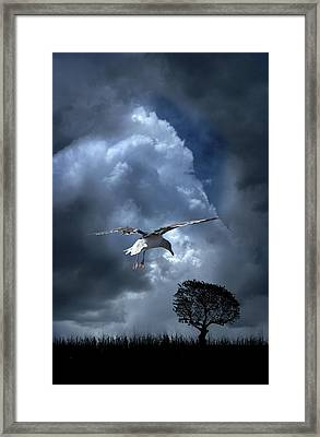 Framed Print featuring the photograph 4472 by Peter Holme III
