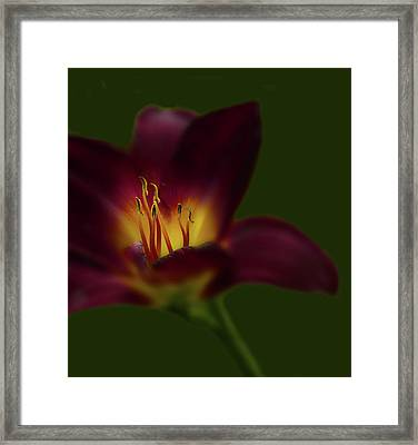 Framed Print featuring the photograph 4479 by Peter Holme III