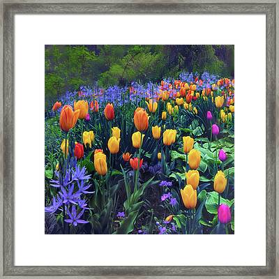 Procession Of Tulips Framed Print