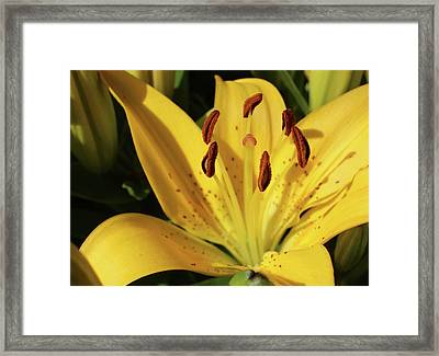 Lily Framed Print by Michele Caporaso