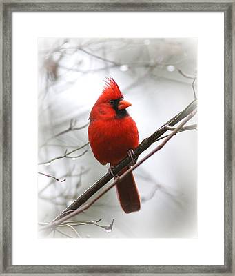 4772-001 - Northern Cardinal Framed Print