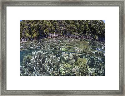 A Healthy Coral Reef Grows Framed Print by Ethan Daniels