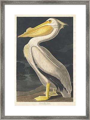 American White Pelican Framed Print by Dreyer Wildlife Print Collections