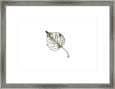 Autumn Day Framed Print by Chastity Hoff