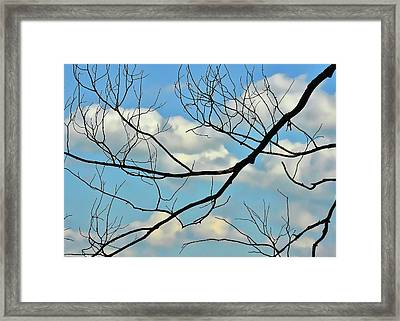 Bare Branches Framed Print by JAMART Photography