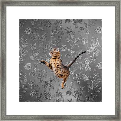 Bengal Cat Jumping Framed Print