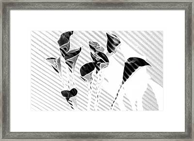 Calla Lilies Framed Print by Gary at TopPhotosI