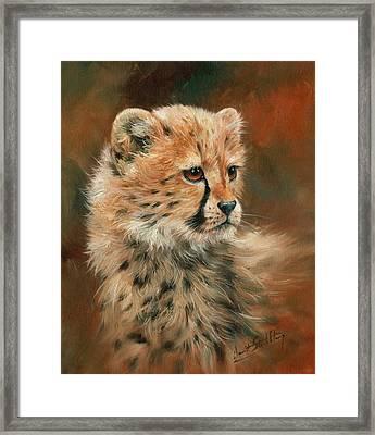 Cheetah Cub Framed Print by David Stribbling