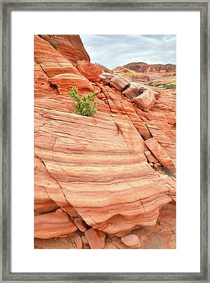 Framed Print featuring the photograph Colorful Wash In Valley Of Fire by Ray Mathis