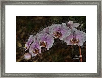 5 Dollar Orchid Framed Print by Deborah Benoit