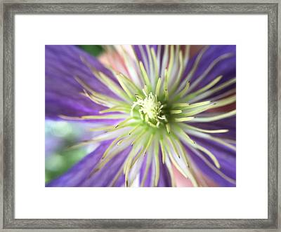 Flower Framed Print by Maxim Tzinman