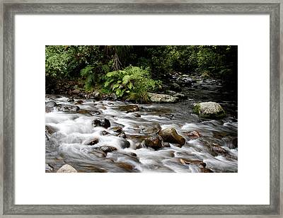 Forest Stream Framed Print by Les Cunliffe