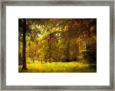 Forest Framed Print by Svetlana Sewell