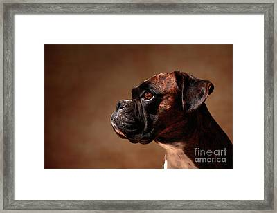 German Boxer Dog Framed Print by Jana Behr