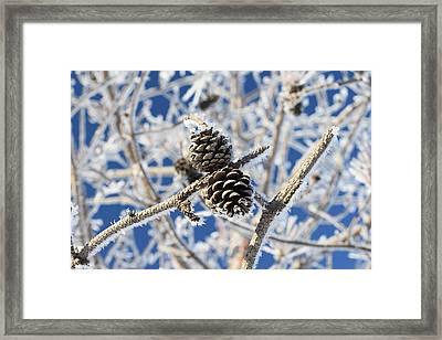 Hoar Frost Framed Print by Dacia Doroff