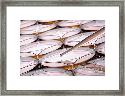 Laboratory Petri Dishes In Science Research Lab Framed Print