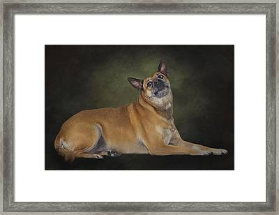 Mabel  Framed Print by Brian Cross