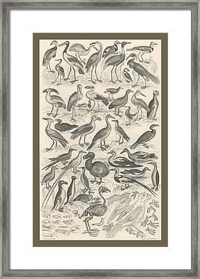 Ornithology Framed Print by Anton Oreshkin
