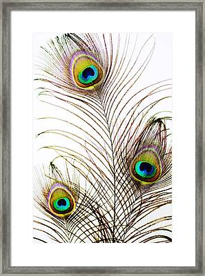 Peacock Feathers Framed Print by Mary Van de Ven - Printscapes