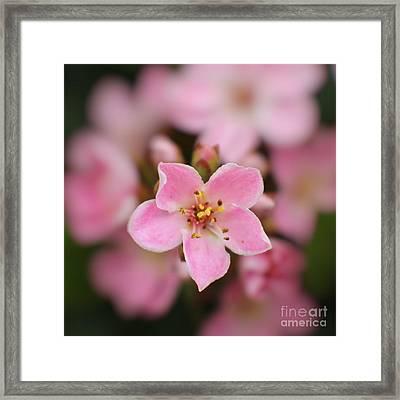5 Pink Petals Framed Print by Ella Kaye Dickey