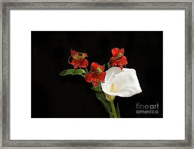 Red With White Framed Print by Elvira Ladocki
