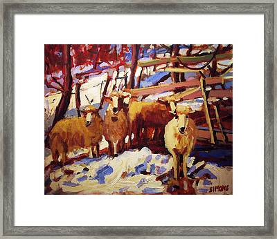 5 Sheep Framed Print by Brian Simons