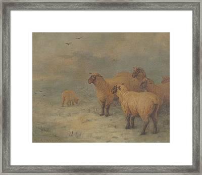 Sheep On Moorland Framed Print