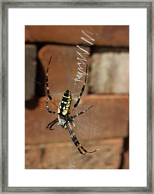 Spider Framed Print by Michele Caporaso