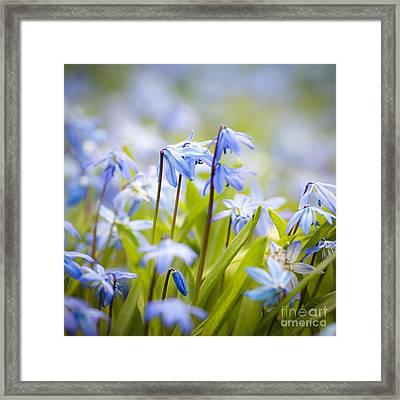 Spring Blue Flowers Framed Print by Elena Elisseeva