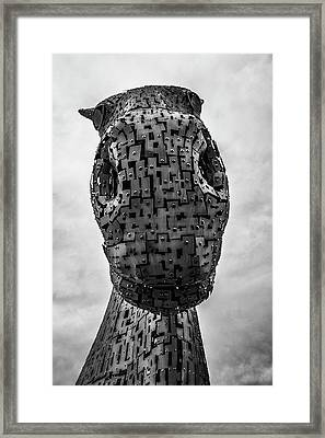 Standing Tall. Framed Print by Angela Aird