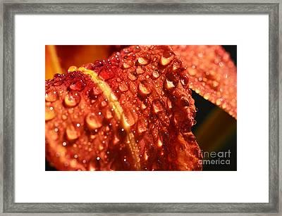 Tawny Daylily And Raindrops Framed Print by Thomas R Fletcher