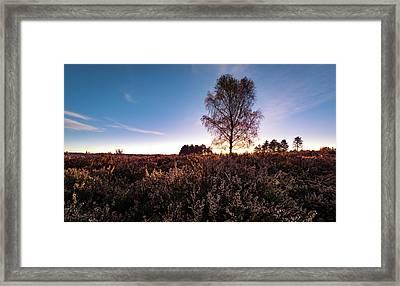 Tree Framed Print by Svetlana Sewell